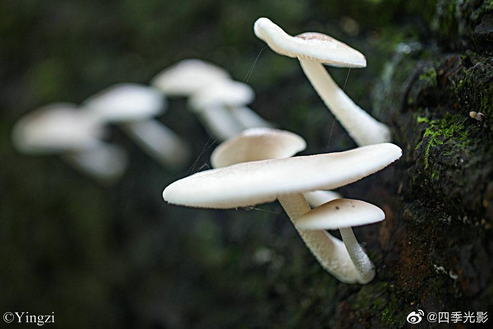 微距摄影能够发现更大的世界,一小丛蘑菇静静的生长