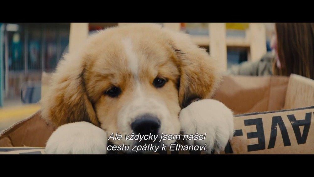 电影 一条狗的使命2 一条狗的使命完整版高清国语版免费