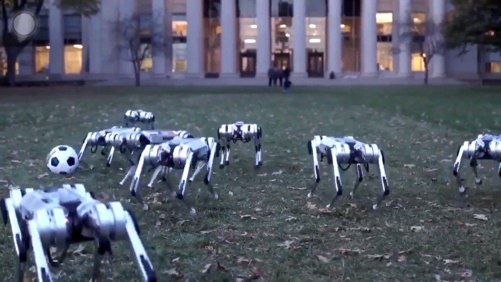 这应该是10年后的狗狗公园吧,坐标:麻省理工学院(TW
