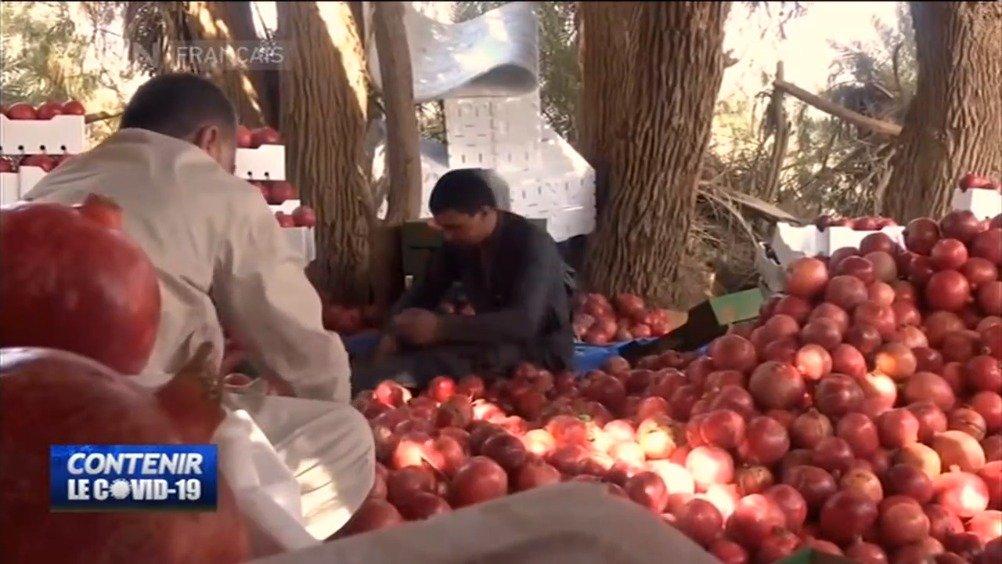 新冠肺炎未影响埃及农产品出口
