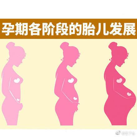 孕期各阶段胎儿发育情况