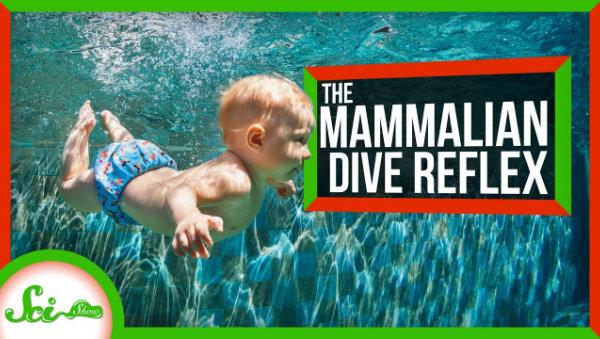 为什么人在水下会感到格外平静?人体真的是很奇妙的存在!