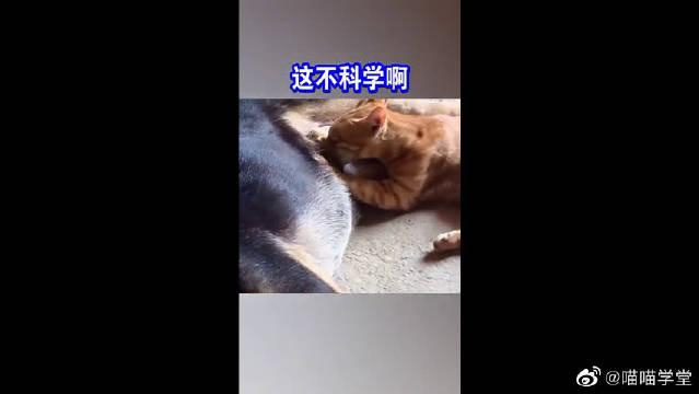 这年头世道是怎么了,猫咪居然去吃狗子的奶,狗子:我也很无奈啊