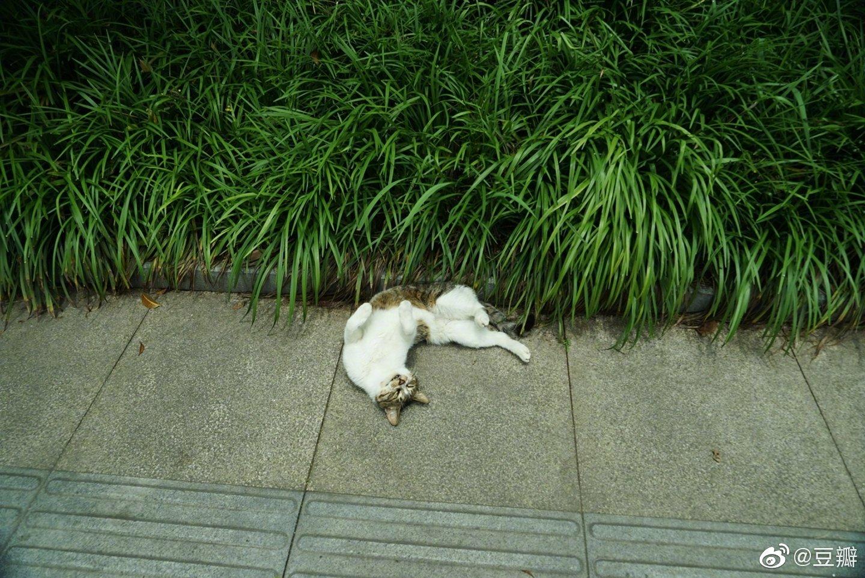 又一次在我路过时从草里滑出来了,我怀疑这根本不是什么偶遇