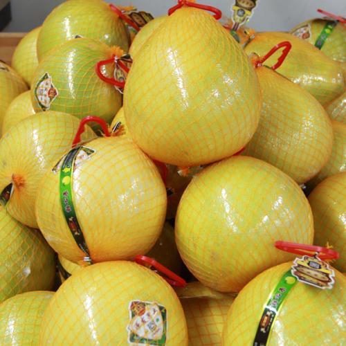 柚子手工制作猪