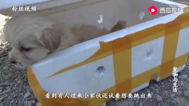 大热天小奶狗被丢泡沫箱,女孩喂水后,小家伙迫不及待想跟她走!