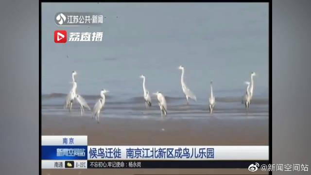 候鸟迁徙 南京江北新区成鸟儿乐园