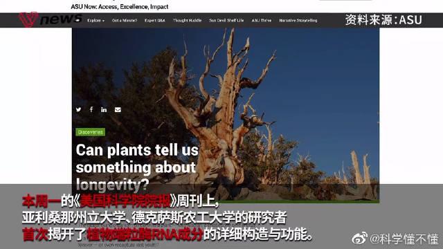 """植物端粒酶首次被破解,人类或许将触及长寿的""""开关""""?"""