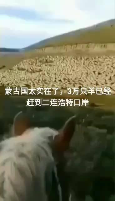 蒙古国太实在了,3万只羊已经赶到二连浩特口岸!