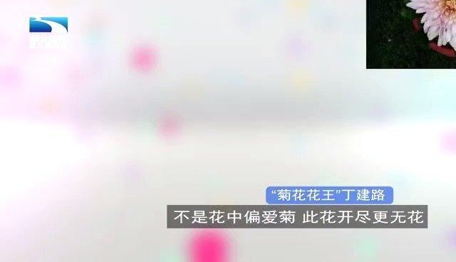 """货车司机到""""菊花花王""""的逆袭之路"""