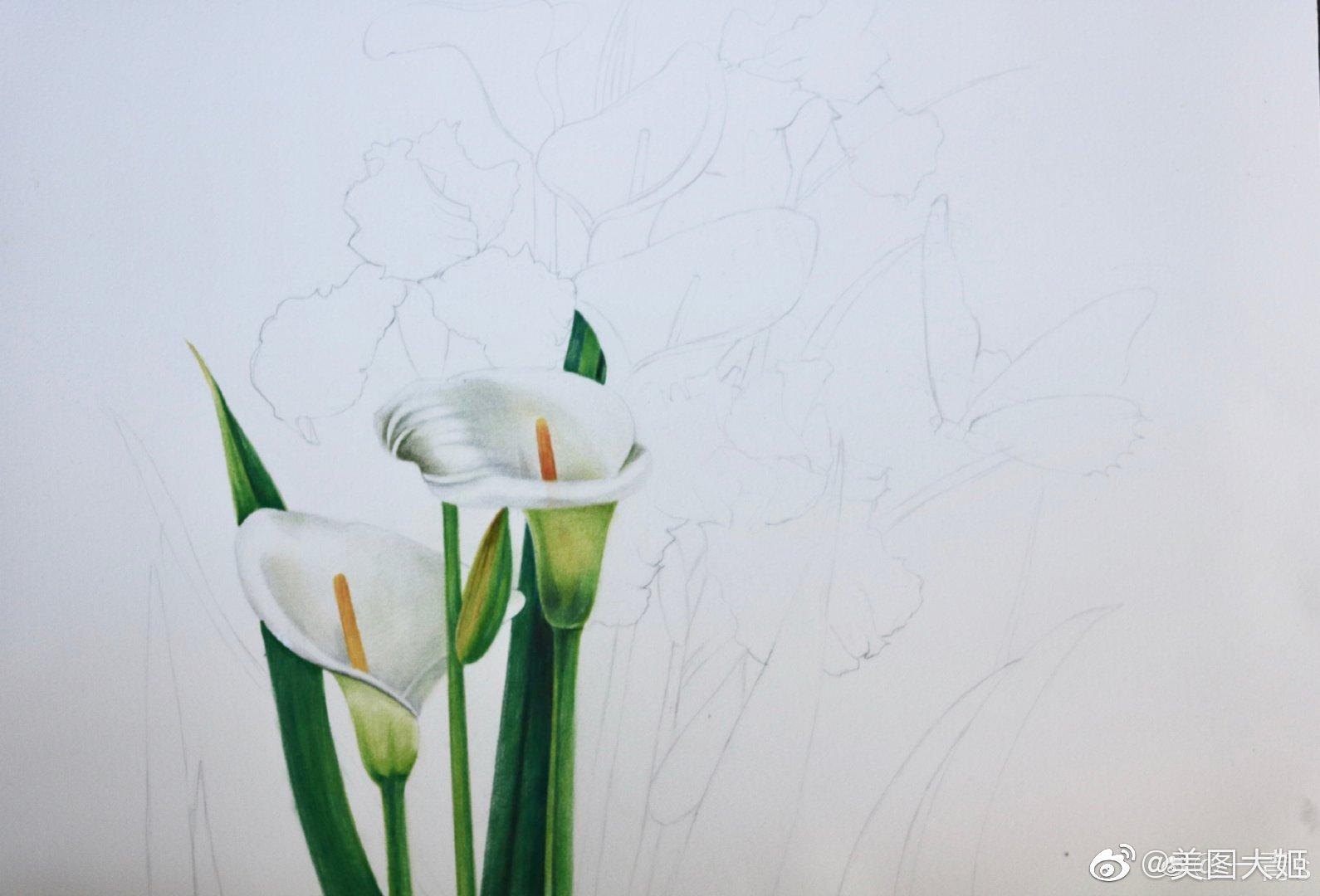 彩铅画手绘作品 花卉作者@一青s