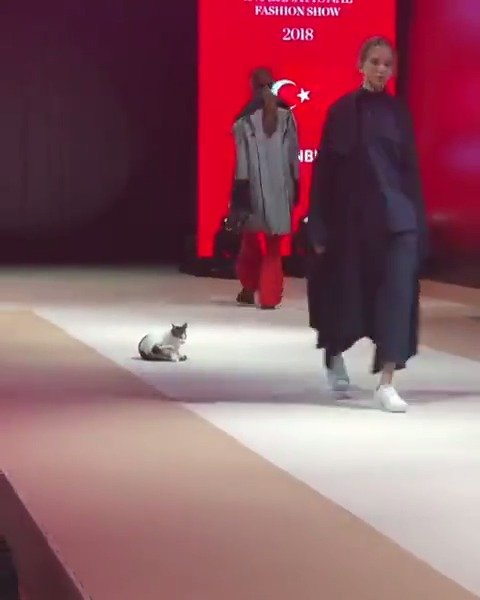 一只误闯上T台的猫,怎么还去干扰别的模特然后就进行了步教学