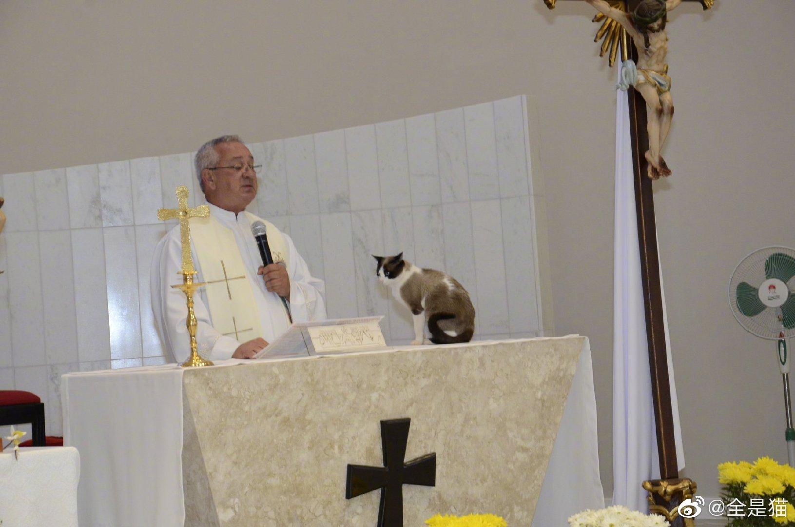猫都是很博学的,到哪儿都能听讲。