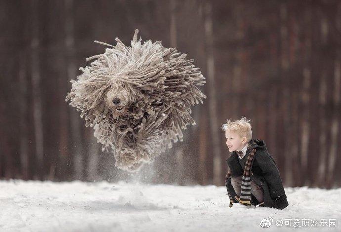 """摄影师Andy Seliverstoff作品""""拖布狗与小正太""""简直是软萌版魔法师"""