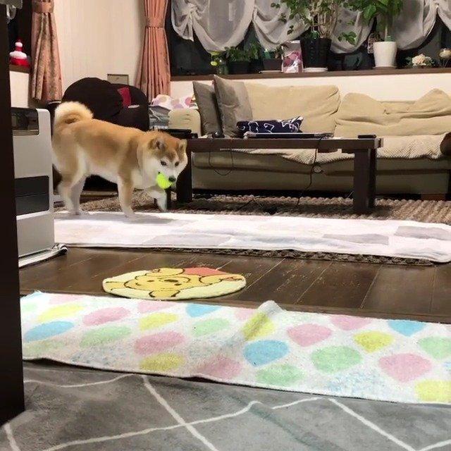 睡什么觉啊!起来陪我玩!      Instagram:mamesukezaemon
