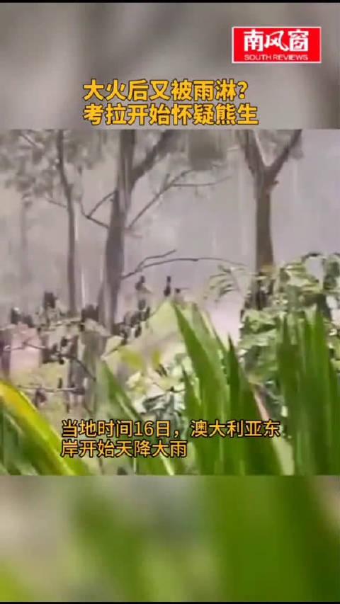 """大火后又被雨淋?考拉开始怀疑""""""""熊生""""考拉 新闻"""