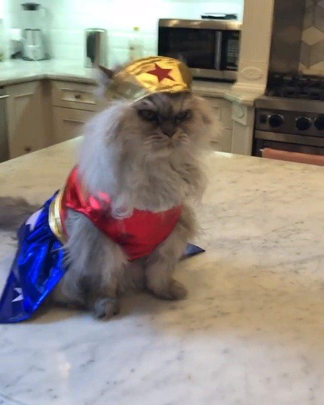 凯特贝金赛尔又给自家猫整花样了,自己当年没能演成神奇女侠