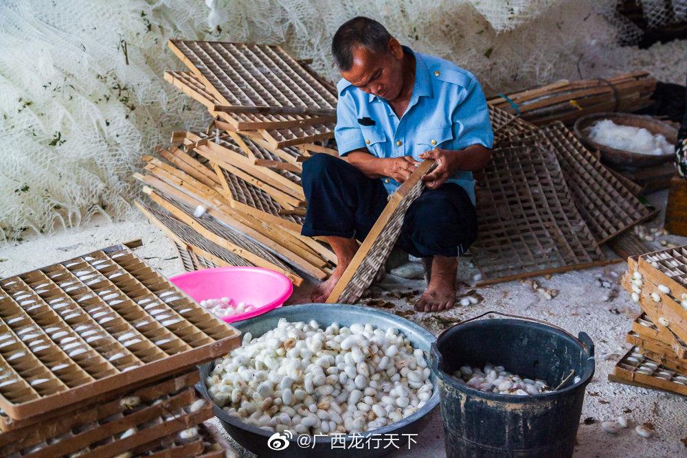 广西崇左龙州洞埠村是个美丽的小山村,但是村民生活比较贫困
