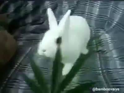 慎点!让你感受下大麻到底有多恐怖!