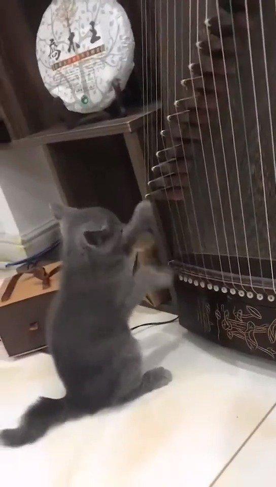 赶紧送孩子去音乐学院进修!