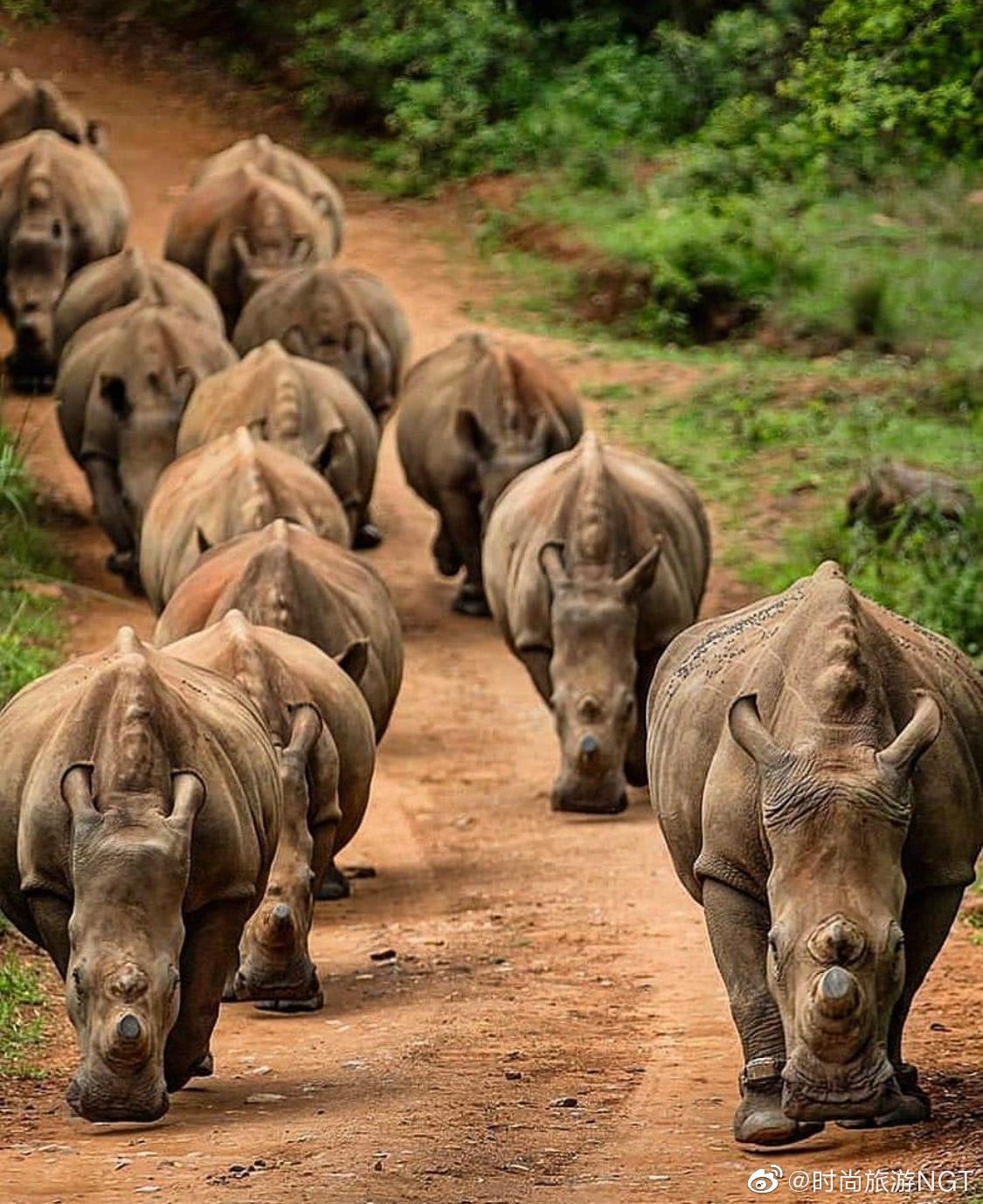 9月22日是。在联合国濒危野生动植物国际贸易公约(CITES)大会上
