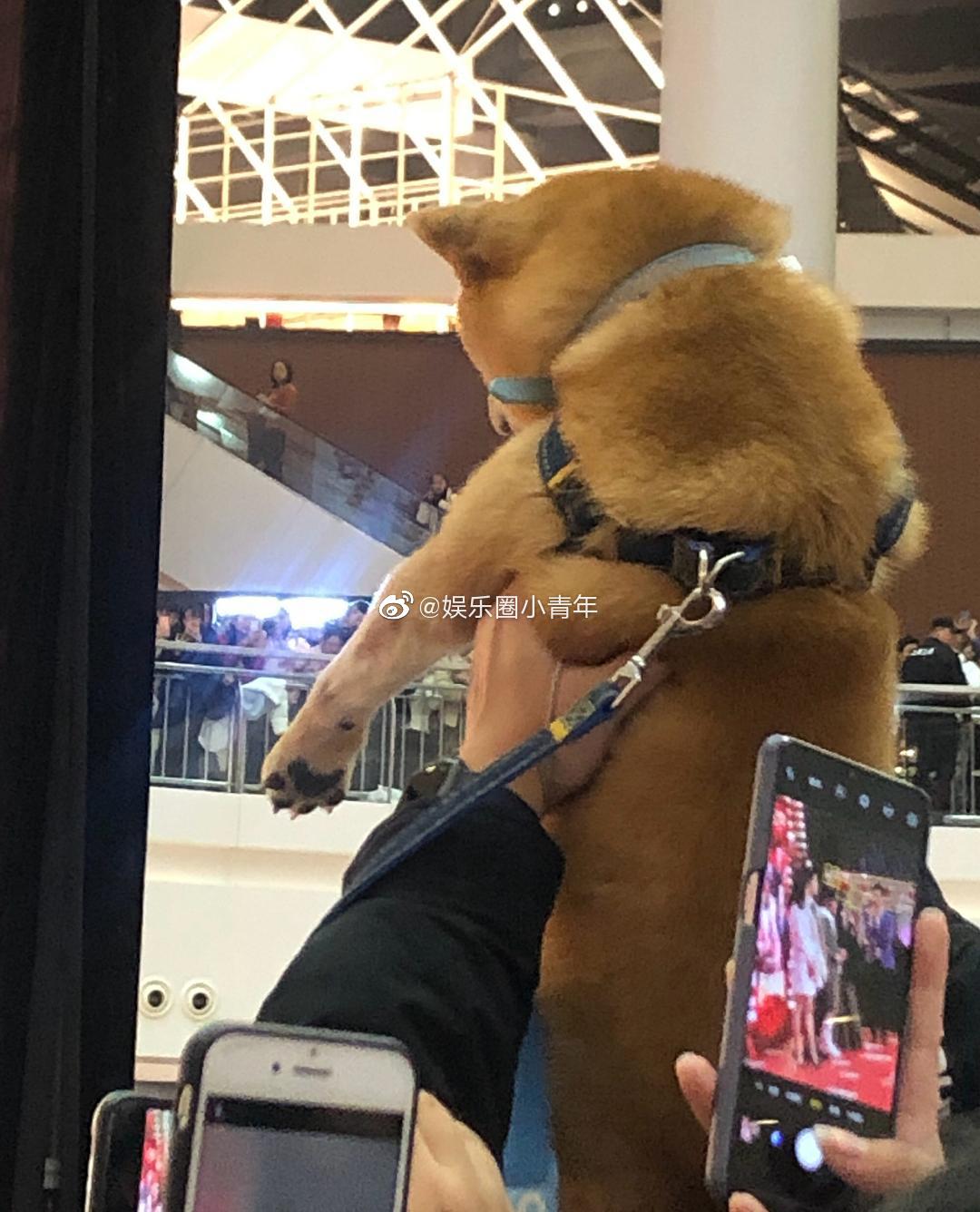 刘昊然路演有粉丝举着柴犬狗子:被迫追星