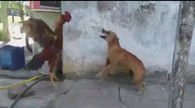 单身狗斗网红,必败无疑!