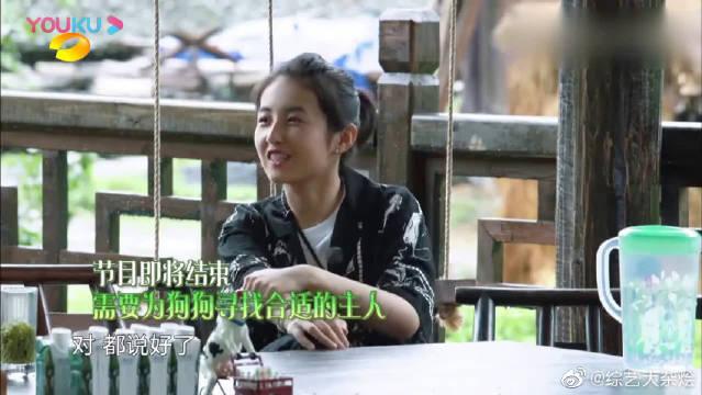 张子枫为了能领养小锅,和妈妈求了半天,人美心善的妹妹!