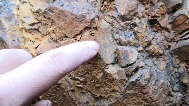 疫情已经太久了,心情很差,强撑着挖化石给大家看