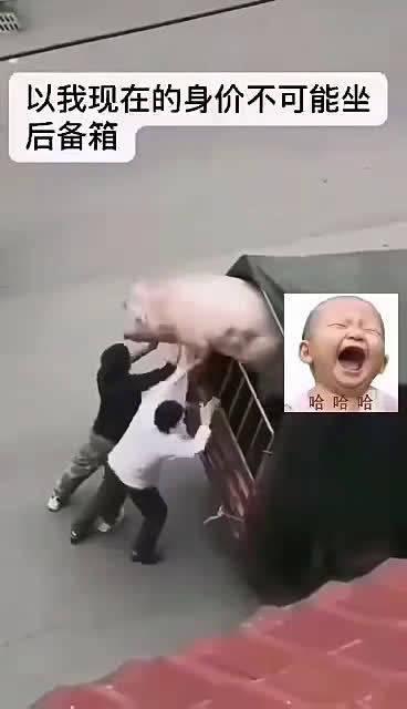 改革年代,猪猪身价非同小可