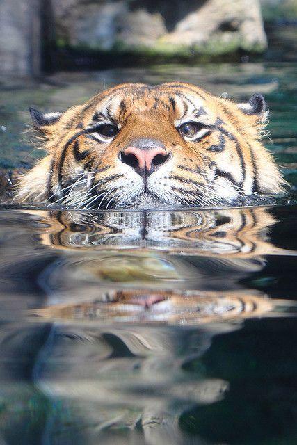 冒死献上美猫沐浴戏水图,大王果然是出水芙蓉美如画!