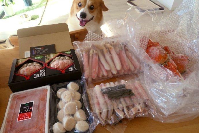 日本网友momopoi家的柯基,表情管理经常崩坏