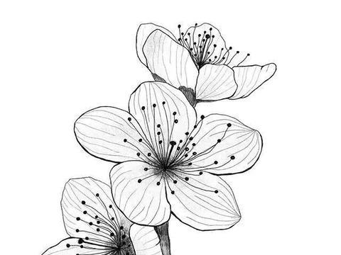 手绘-一组针管笔手绘花卉插画