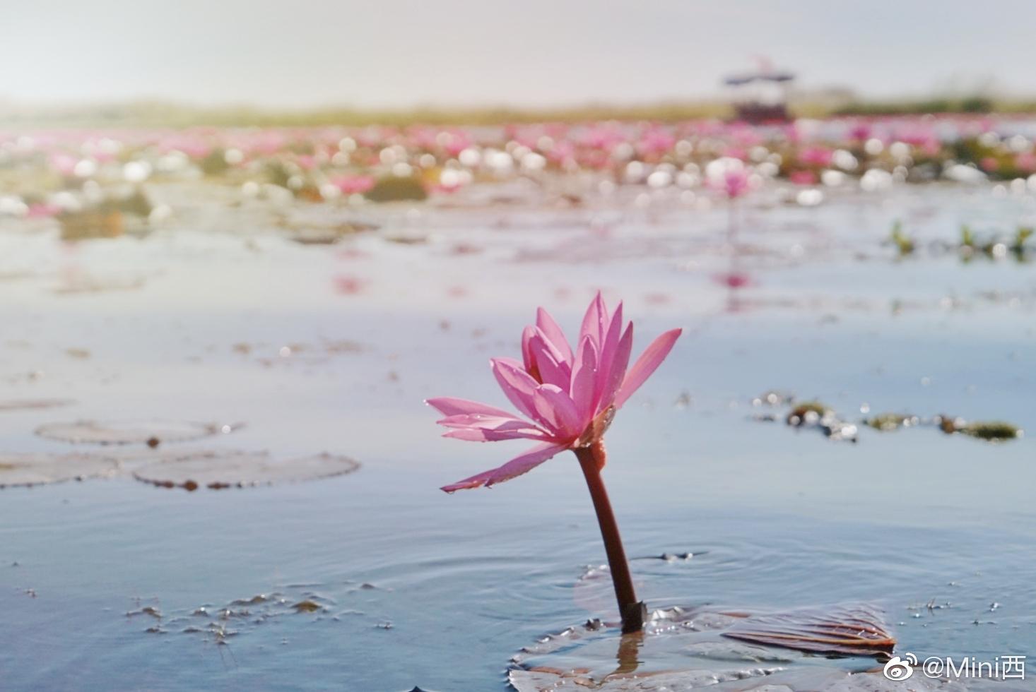 泰北乌隆府红莲湖,cnn评选出的世界奇迹,正当季