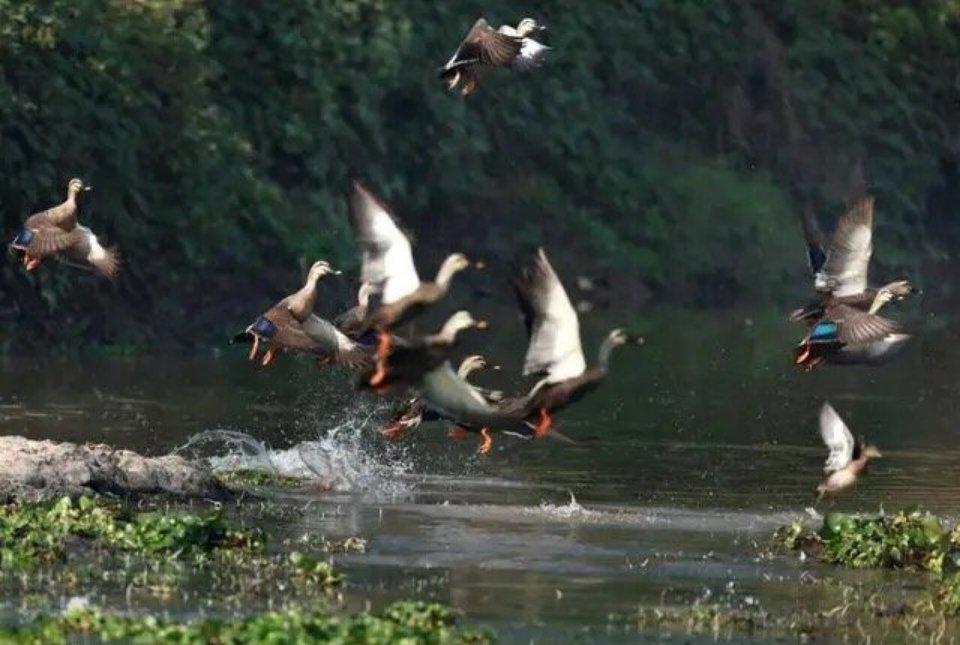 武义这个湿地公园成观鸟乐园