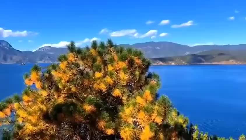 风穿过泸沽湖明媚的阳光,带着花香与海蓝