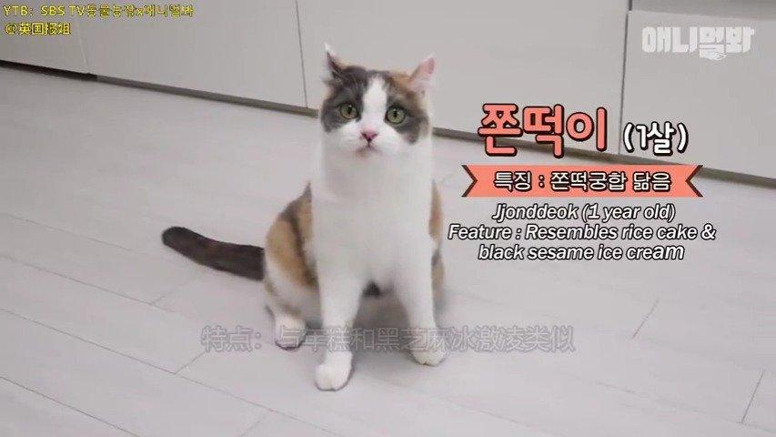 一只为了零食决定走上犯罪道路的猫