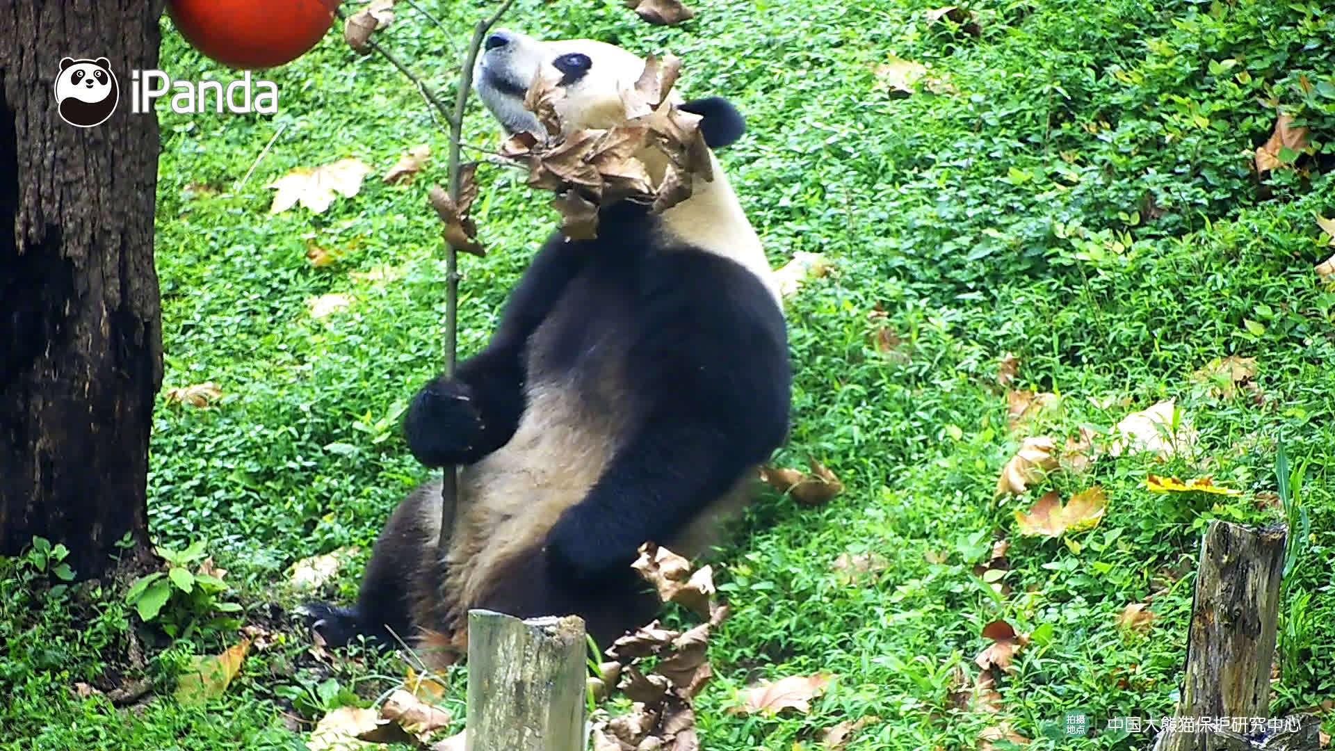动手达熊的今日成就