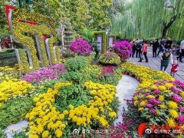 10月23日,泉城秋意浓,趵突泉畔各类品种的菊花争奇斗艳