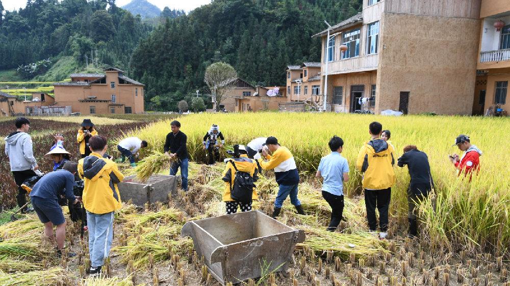 探访贵州黔西南五彩稻米之乡,五彩稻田美如画,村民喜迎大丰收