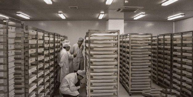 中國最大的蚊子製造廠,用羊血餵養蚊子,每個月釋放3000萬隻