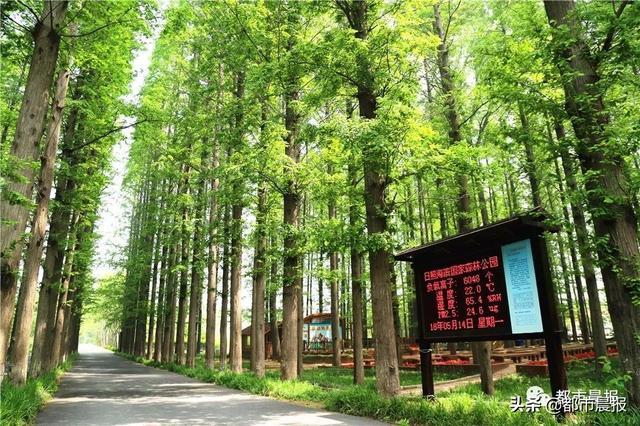 图片来自日照海滨国家森林公园官网兰河峪攻略图片