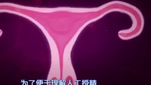 人工受精?试管婴儿?是怎么回事?(上看我的最新短视频