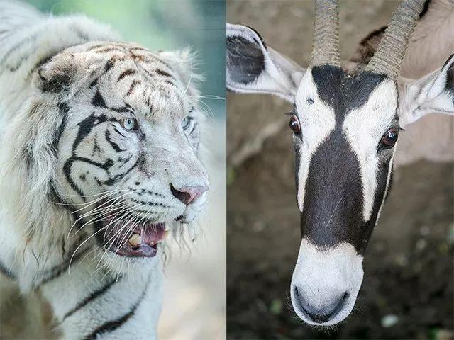 想在动物园拍出精彩大片,这些问题你必须注意!