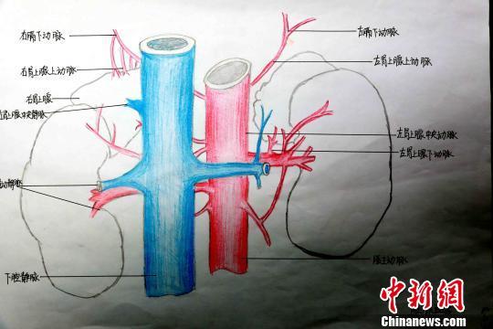 青海护士手绘人体局部解剖图显医学大美