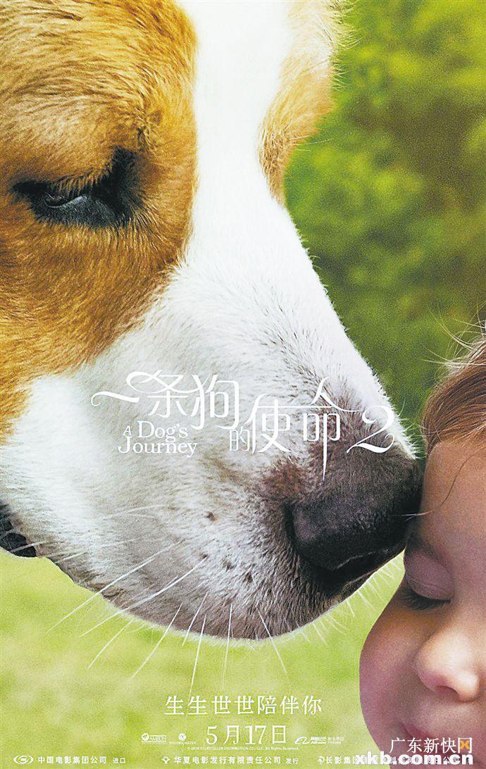 《一条狗的使命2》定档5月17日 - 新浪网 -ffa7-hwsffzc5752765
