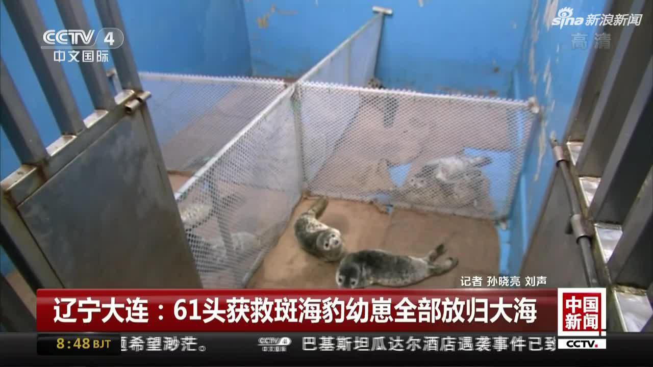 辽宁大连:61头获救斑海豹幼崽全部放归大海