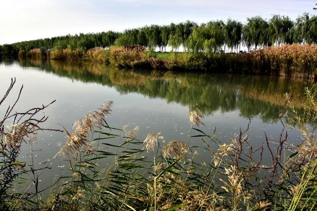 中央环保督察组:陕西渭南政企联手侵占湿地,违规开发旅游项目