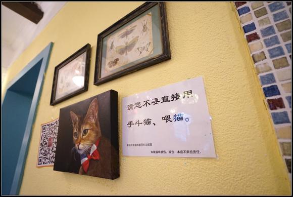 这里最大的亮点:有猫咪陪伴,再也不会孤单,满满的温暖和治愈。