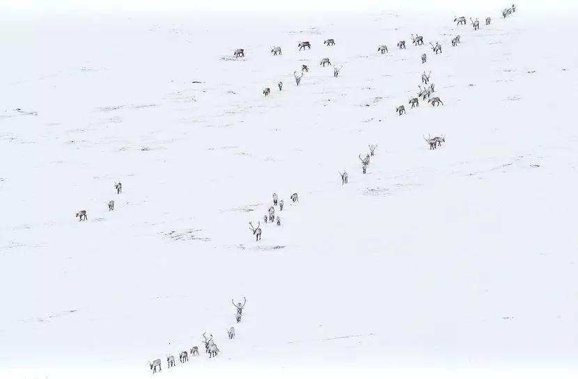 张张震撼人心,2019自然世界摄影大赛揭晓